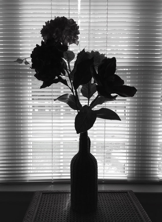 Silhouette iPhone Photos 13