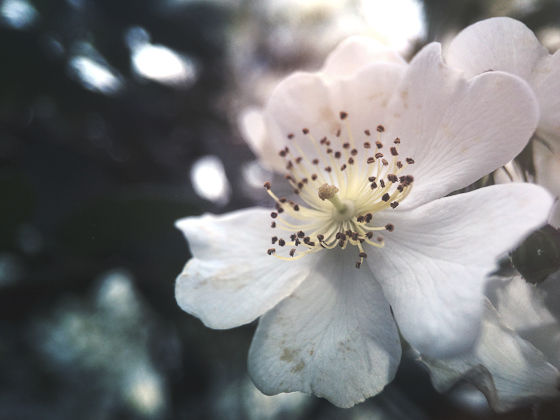 Flower photography 48