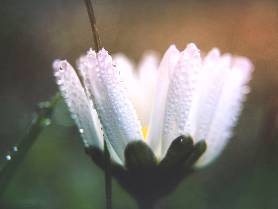 Flower photography 61