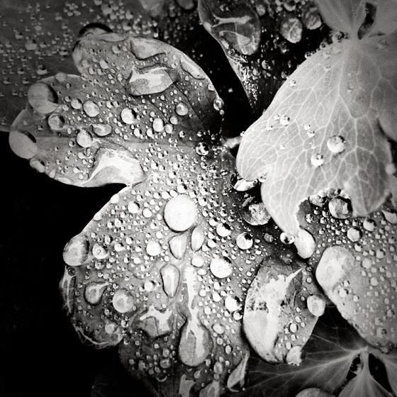 Rainy Day iPhone Photos 25