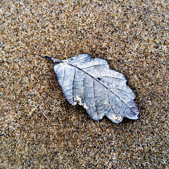 iPhone Photos of Leaves 20